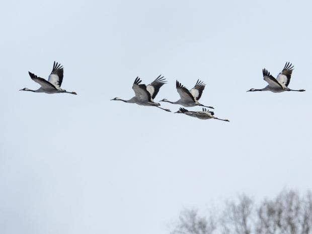 birds-rx.jpg