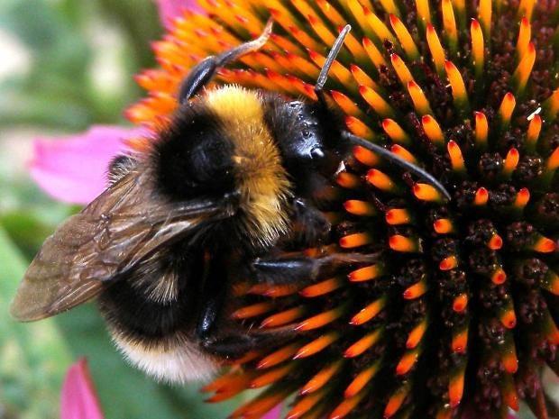 22-bees-pa.jpg