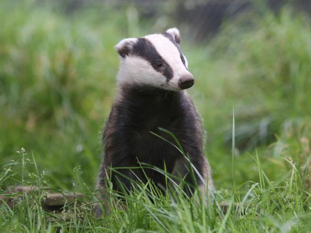 badger-rx.jpg