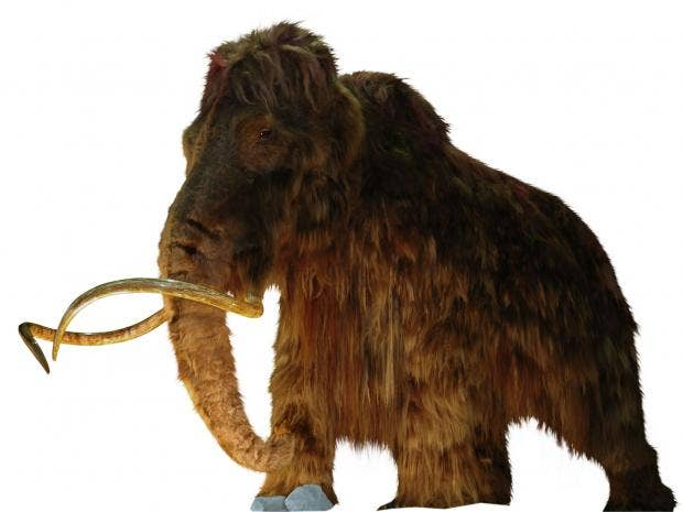 woolly_mammoth_cutout.jpg