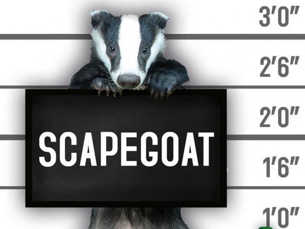 badgerscapegoat.jpg