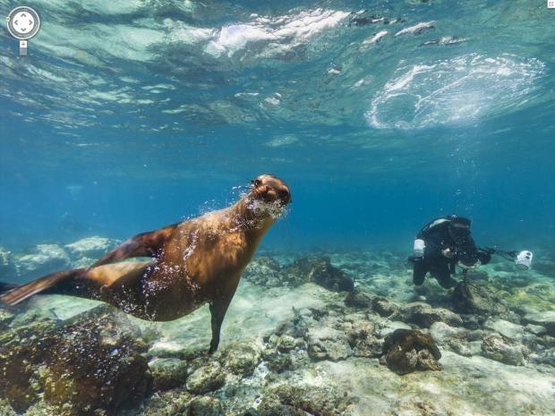 underwater-streetview-googl.jpg