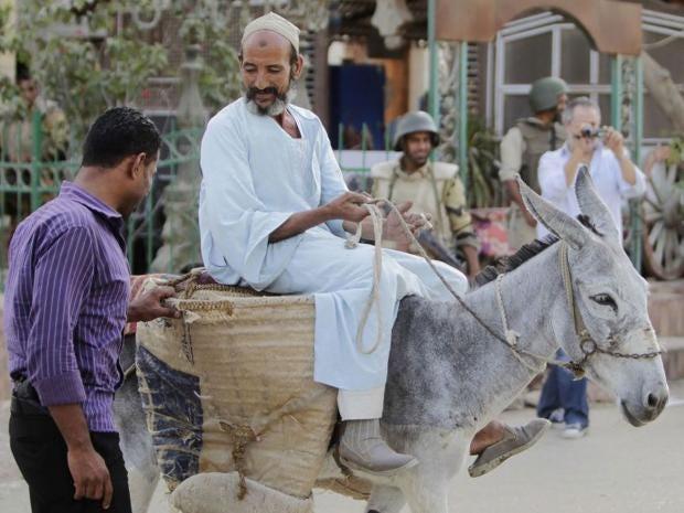 donkey-egypt-clashes.jpg