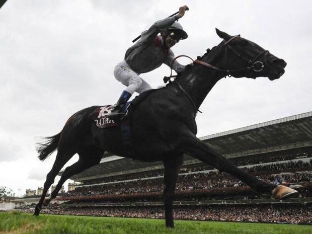 15_HORSE_AFP.jpg