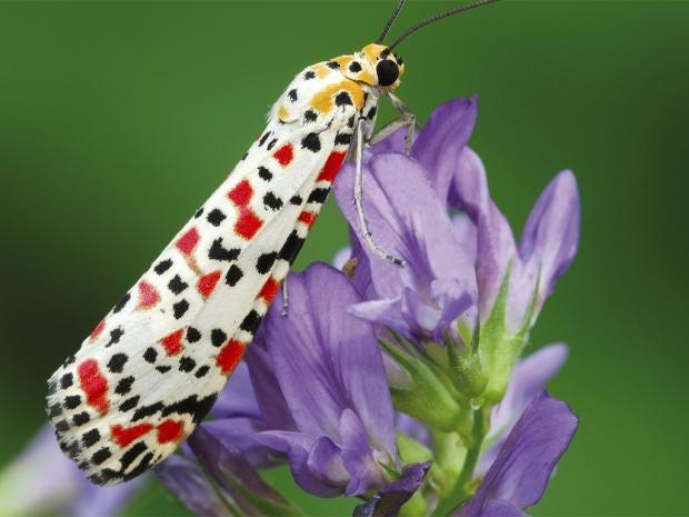 web-butterflies-pa.jpg