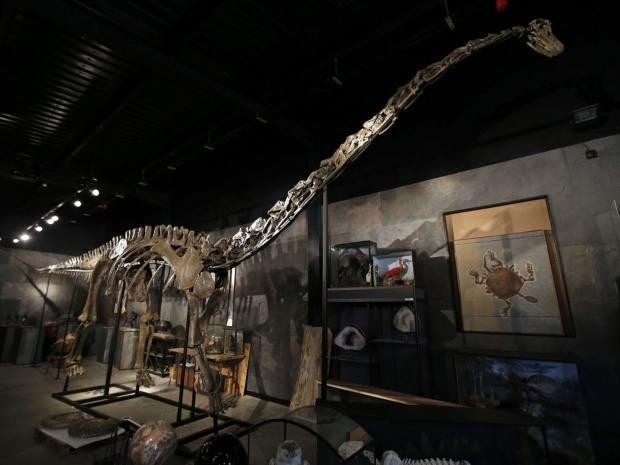 Diplodocus-longus-ap.jpg