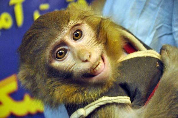 monkey-in-space.jpg