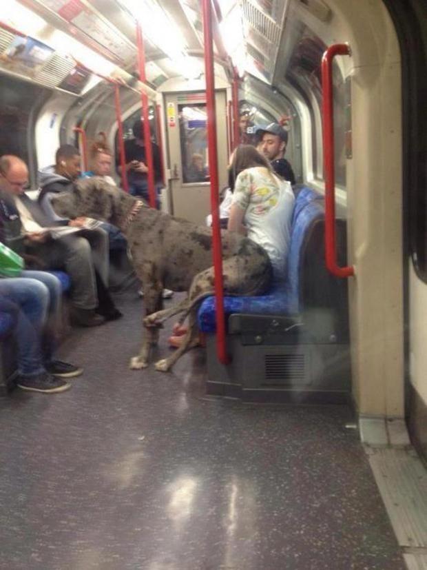 dog-on-train.jpg