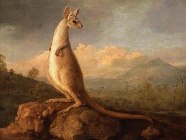 stubbs-kangaroo.jpg