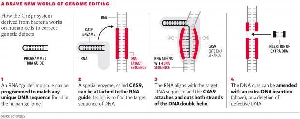 web-genetics-graphic.jpg