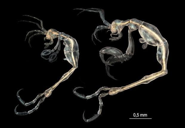 terror-shrimp.jpg