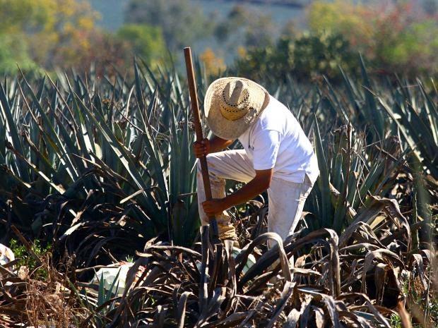 58-tequila-Getty.jpg