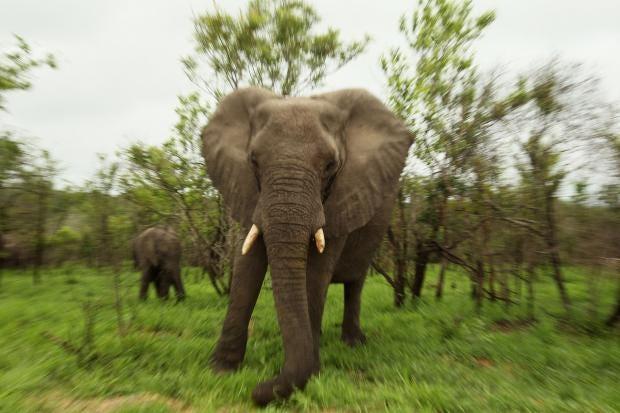 elephants2.jpg