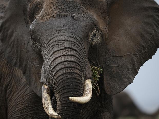 31-ELEPHANTS-AFP-Getty.jpg