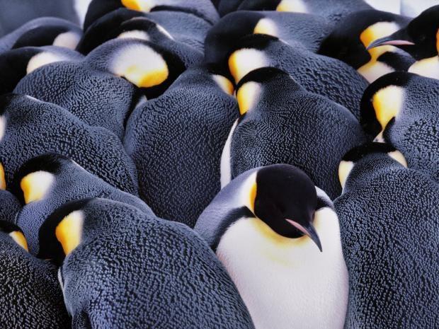 penguins2-rx.jpg