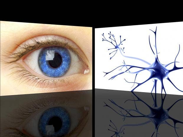 web-eye-cells-getty-c.jpg