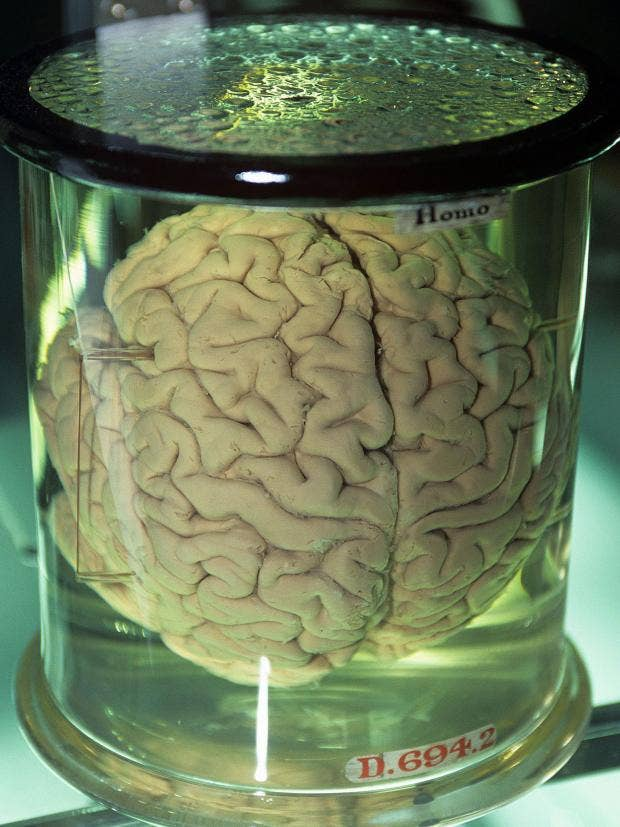 brain-in-jar.jpg