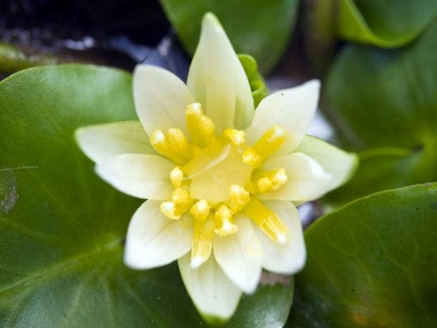 rare-flower-kew-rx.jpg