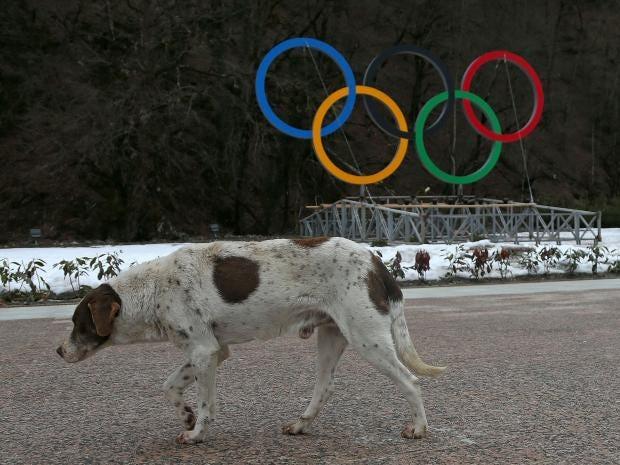 Sochi-stray-dog.jpg