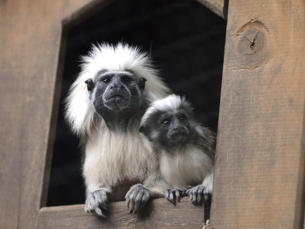 web-monkeys-getty.jpg