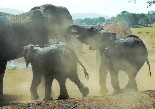 elephants in the dust cover.jpg