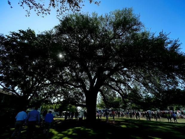 Eisenhower-Tree.jpg