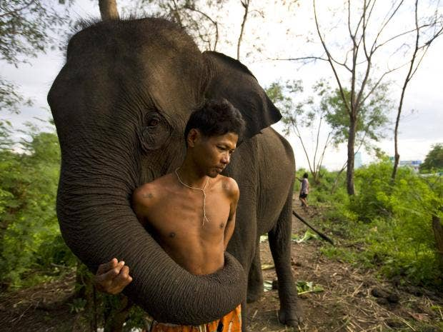 Elephants can recognise the gender and ethnicity of human