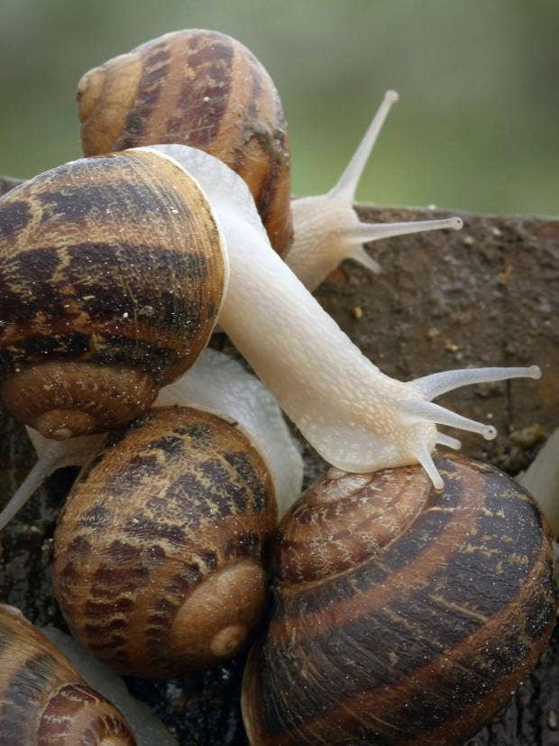 31-Snails-AP.jpg