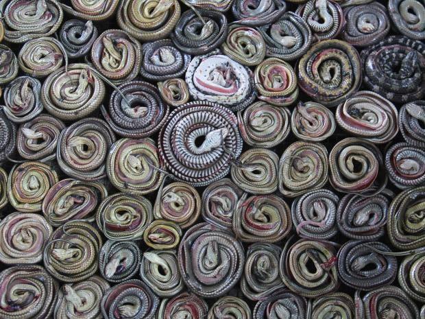snakes-1.jpg