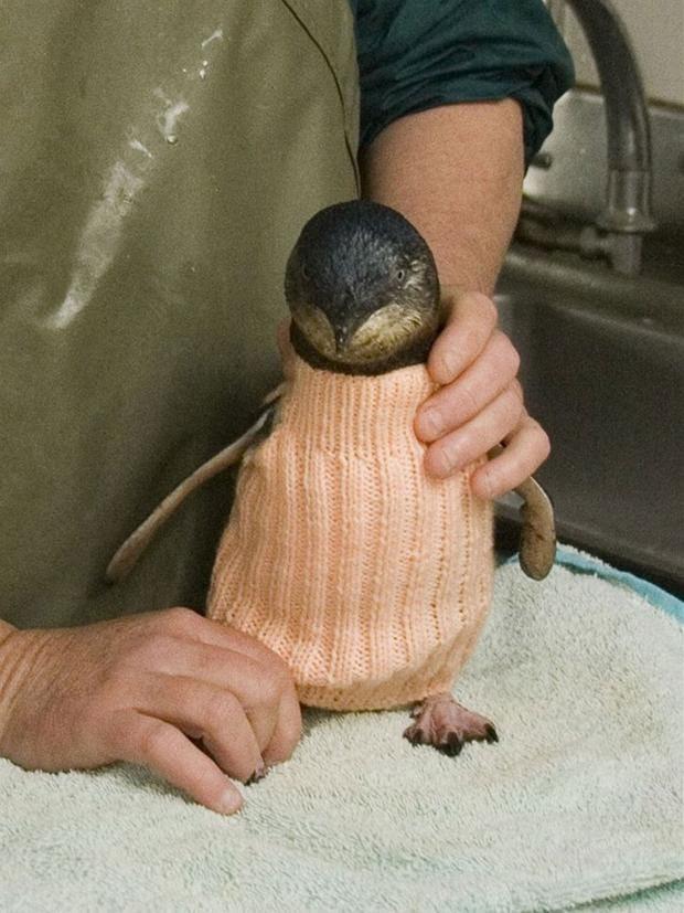 pinguin-2.jpg