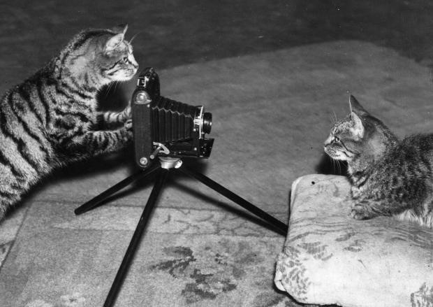 cat-interview.jpg