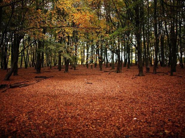 Woodland-Getty.jpg