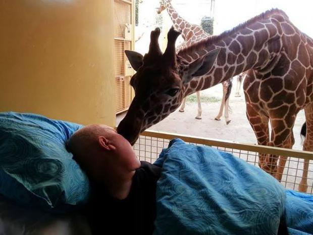 giraffegoodbye.jpg