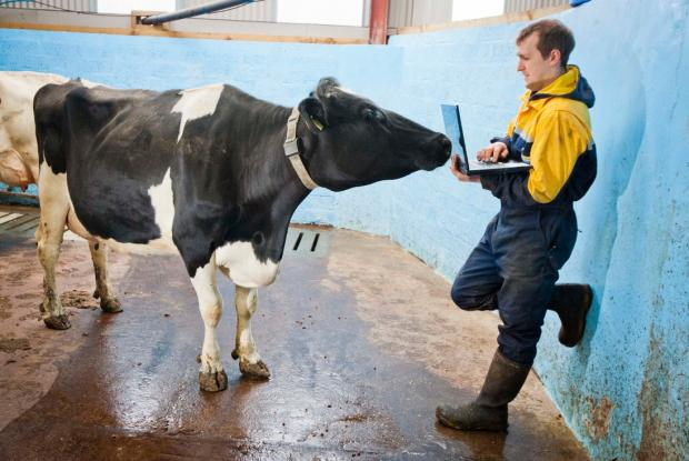 cattle0013.jpeg