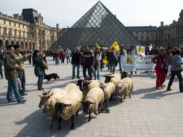 Sheep-le-louvre.jpg
