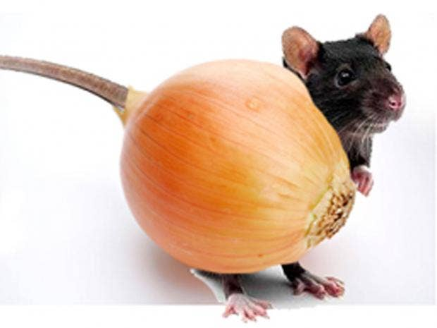 rspca-calls-onion-mouse.jpg