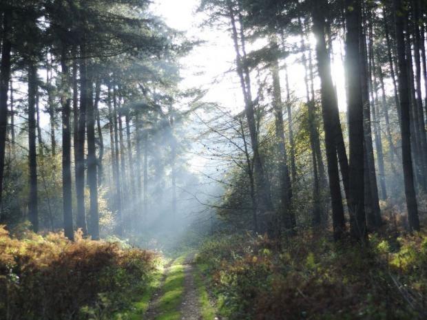 REX-Sherwood-Forest.jpg