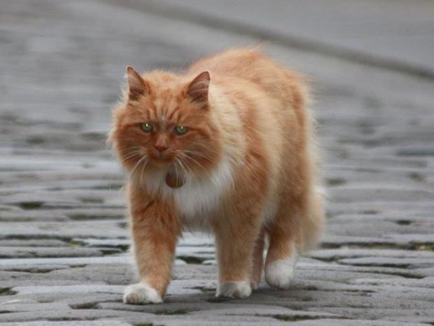 Hamish-the-cat.jpg