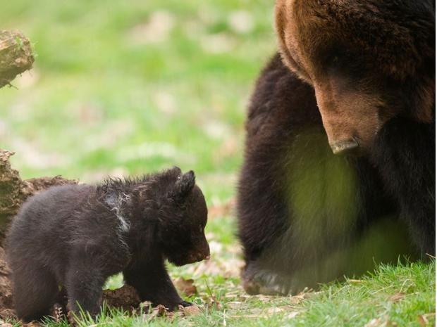 bearcubs1.jpg