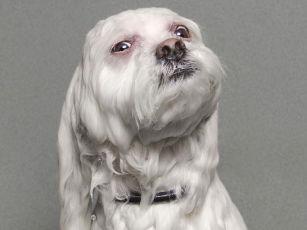 wet-dogs-10.jpg