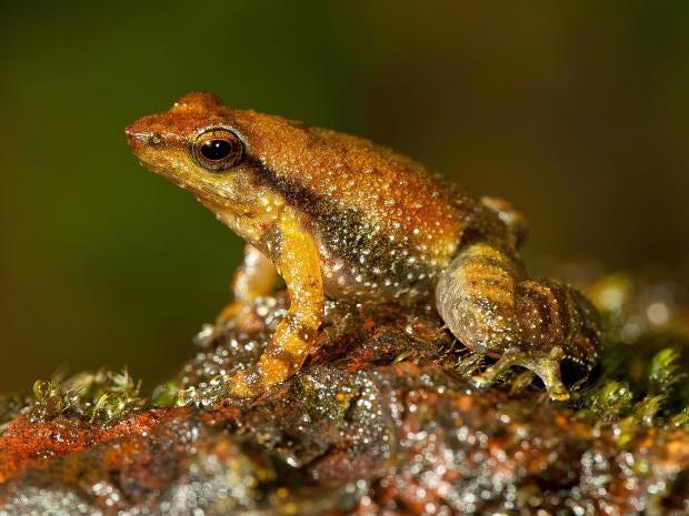 frogs-7.jpg