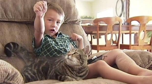 Cat Rescues Little Boy From Dog Attack