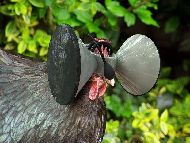 chicken_vr_5.jpg