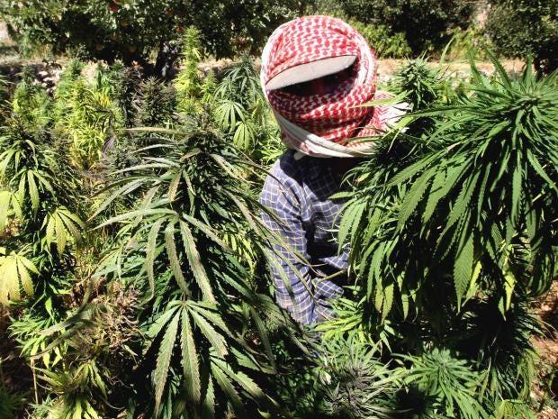 pg-34-cannabis-getty.jpg