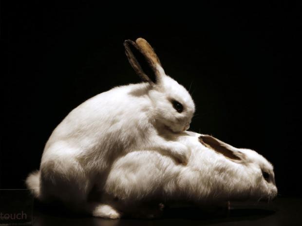 sex-rabbits.jpg