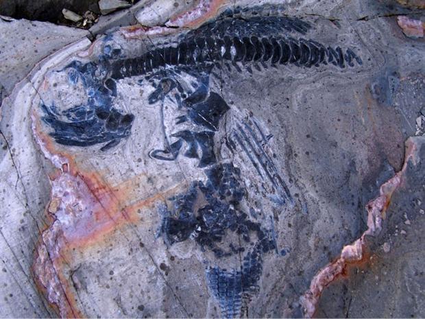 ichthyosaur-graveyard.jpg