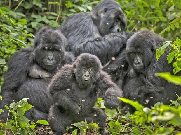 web-virunga-getty.jpg