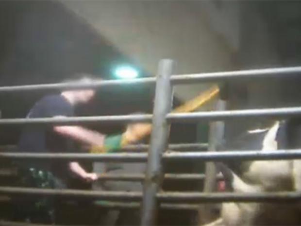 animal-cruelty.jpg
