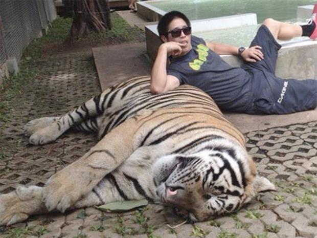 Stop Taking Tiger Selfies That Fund Animal Abuse