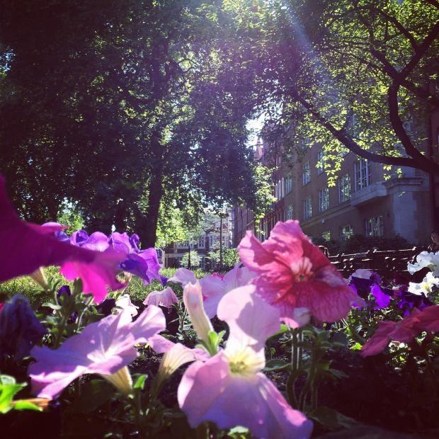 Mount_Street_Gardens-captioned.jpg